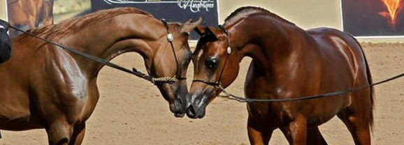 Top 10 Things to See and Do at Scottsdale's Arabian Horse Show