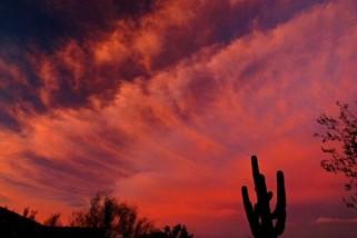 Sonoran Summer Skies
