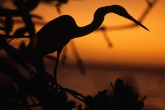 Ted Talk: Stunning photos of the endangered Everglades