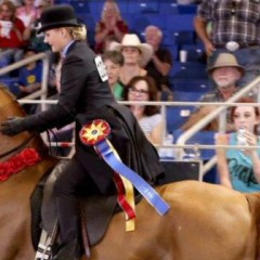 Scottsdale Arabian Horse Show Runs Feb. 16 – 27