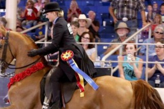 61st Annual Scottsdale Arabian Horseshow, Feb. 11 – 21, 2016