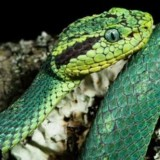 Phoenix Herpetological Society to Exhibit Reptiles on March 5th
