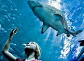 OdySea Aquarium Opens in Scottsdale on Saturday, Sept. 3