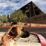 Foothills Animal Rescue Unveils New Facility