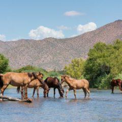 Arizona Wild Beauty: First Encounter