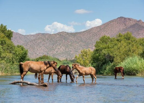 Arizona Wild Beauty: Patch's First Steps Video