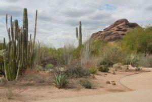Desert_Botanical_Garden_Phoenix_Arizona_3